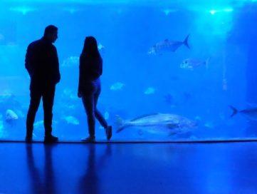 people standing inside an aquarium looking at fish